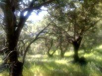 Korfu, Reiseimpressionen, Griechenland, Wald