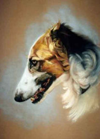 Kreide, Pastellmalerei, Zeichnung, Hundeportrait