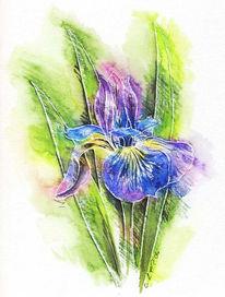 Stillleben, Feder, Iris, Aquarellmalerei