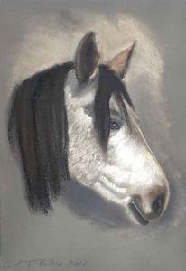 Pferdekopf, Kreide, Pferdeportrait, Pferde