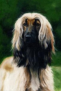 Afghanischer windhund, Malerei, Portrait