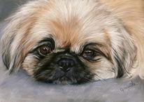 Tierportrait, Zeichnung, Hund, Pekinese