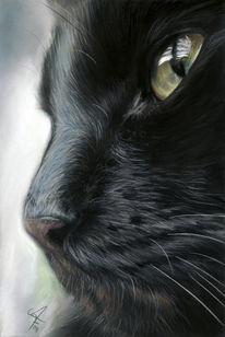 Schwarze katze, Malerei, Katze