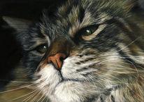 Katzenportrait, Katze, Pastellmalerei, Zeichnungen