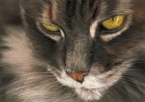 Katzenportrait, Katze, Zeichnungen