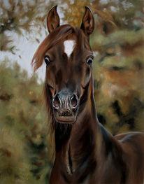 Pastellmalerei, Portrait, Pferde, Tierportrait