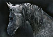 Araber pferd, Malerei, Figural, Araber