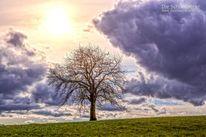 Baum, Wolken, Natur, Lila wolken