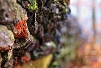 Natur, Farben