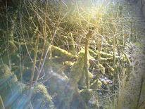 Licht, Sonne, Frühling, Landschaft