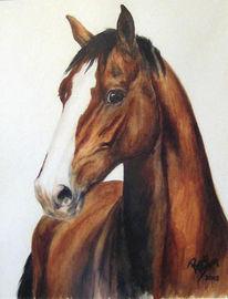 Aquarellmalerei, Tiere, Pferde, Portrait