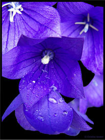 Fotografie, Pflanzen, Welt, Lila