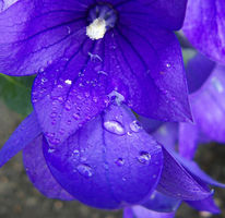 Welt, Lila, Blumen, Violett