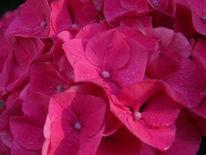 Pflanzen, Welt, Fotografie, Pink