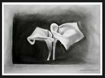 Callas, Ruschig, Stillleben, Zeichnung