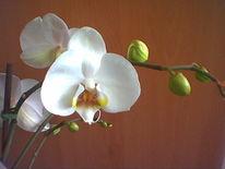Blütenzweig, Pflanzen, Weiß, Digital