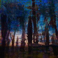 Baum, Himmel, Schatten, Blau