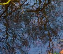 Wasser, Baum, Spiegelung, Fotografie