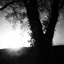 Baum, Äste, Sonne, Strahlen