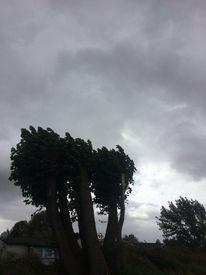 Wind, Dunkel, Baum, Himmel