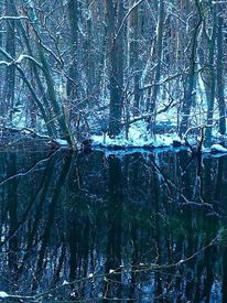 Winterbäume, Spiegelung, Wasser, Frostig