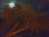 Baum, Mond, Himmel, Fotografie