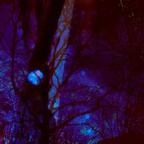 Baum, Violette nacht, Blauer mond, Digitale kunst
