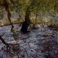 Spiegelung, Riss, Moor, Baumstumpfe