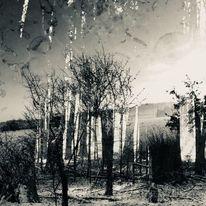 Zwischenwelten, Baum, Mischtechnik,