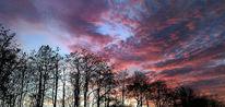 Abend, Landschaft, Sonne, Krähe