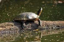 Reiseimpressionen, Regenwald, Schildkröte, Tropen