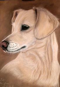 Zeichnung, Tiere, Pastellmalerei, Hund