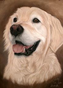 Hund, Pastellmalerei, Zeichnungen, Rocky