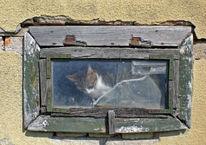 Fenster, Katze, Alt, Fotografie