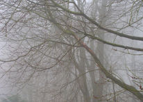 Dick, Suppe, Nebel, Fotografie