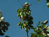 Wind, Blätter, Herbst, Fotografie