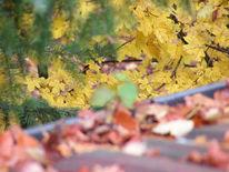 Fotografie, Baum, Heranwachsen, Optimist