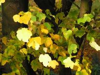 Herbst, Ahorn, Digitale kunst