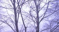 Durchblick, Nadelbäume, Nebel, Fotografie