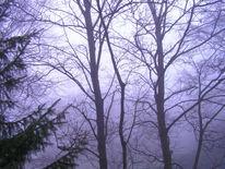 Fotografie, Nebel, Landschaft, Durchblick