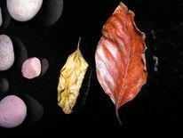 Kirschblätter, Glasplatte, Fotografie, Stein