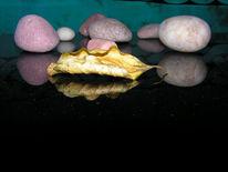 Stein, Fotografie, Kirsche, Blätter