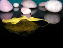 Stein, Blätter, Fotografie, Herbst