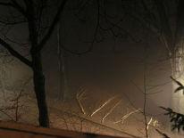 Nebel, Park, Birken, Fotografie