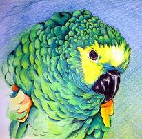 Papagei, Tiere, Zeichnung, Vogel
