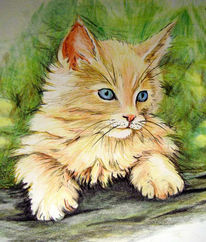 Tiere, Mieze, Katze, Zeichnung