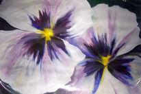 Malerei, Stiefmütterchen, Pflanzen, Blüte