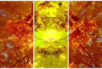 Abstrakt, Fotografie, Kirschbaum