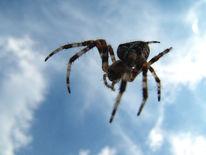Himmel, Spinne, Fliegen, Fotografie