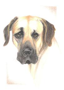 Zeichnung, Hund, Skizze, Dogge